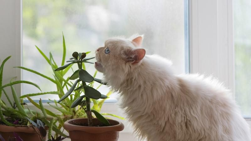 Top 5 Pet-Friendly Plants to Spruce Up Your Home